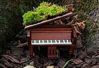 Music&Nature